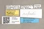 3130544 Stylogaster rafaeli PT labels IN
