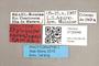 3130548 Stylogaster souzalopesi PT labels IN