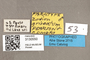 3130550 Zodion griseatum PT labels IN
