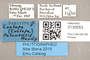 3130553 Coelopa palauensis PT labels IN