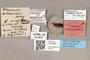 3130556 Themara ostensackeni HT labels IN