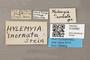 3130562 Botanophila inornata HT labels IN