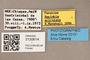 3130614 Spelobia aciculata PT labels IN