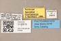 3130615 Spelobia brevipteryx PT labels IN