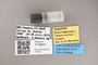 3130643 Minilimosina bipara PT labels IN