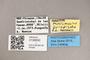 3130650 Minilimosina priapisma PT labels IN