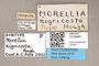 3130681 Morellia nigricosta ST labels IN