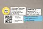 3130709 Paralucilia adespota PT labels IN