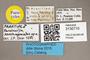 3130710 Paralucilia xanthogeniatas PT labels IN