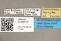 3130717 Acridophaga reversa PT labels IN