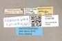 3130726 Acanthodotheca alcedo PT labels IN