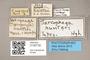 3130732 Protodexia hunteri T labels IN