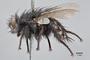 3130733 Servaisia coloradensis PT p IN