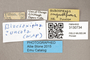 3130734 Servaisia uncata PT labels IN