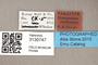 3130747 Bercaeopsis rabunensis PT labels IN