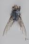 3130750 Bercaeopsis seagoi PT d IN