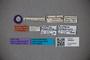 3048547 Oxytelus testaceicollis ST labels IN