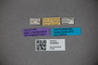 3048558 Apocellus obscurus ver pennatus ST labels IN