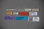 3048564 Trogophloeus aequithorax LT labels IN