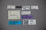 3048570 Trogophloeus flavibasis HT labels IN