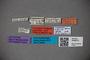 3048572 Trogophloeus calidus LT labels IN