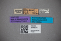 3048578 Trogophloeus heydeni ST labels IN