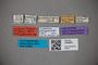 3048581 Trogophloeus parcepunctatus LT labels IN