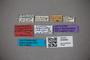 3048582 Trogophloeus punctiger LT labels IN
