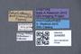 3048065 Tetrabothrus pubescens ST labels IN