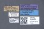 3048064 Tetrabothrus clavatus HT labels IN