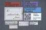 3048053 Carpelimus postremus HT labels IN