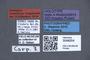 3048054 Carpelimus rougemonti HT labels IN