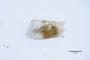 3048054 Carpelimus rougemonti HT g IN
