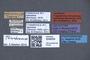 3048059 Trogophloeus splendidus LT labels IN