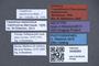 3048060 Trogophloeus manchuricus NT labels IN