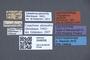 3048058 Trogophloeus planicollis LT labels IN