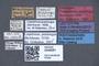 3048061 Trogophloeus praelongus LT labels IN
