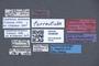 3048056 Trogophloeus torrentum LT labels IN