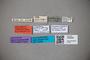 3048590 Trogophloeus semiopacus LT labels IN