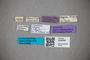 3048595 Trogophloeus vagus ST labels IN
