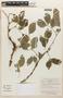 Zygia cauliflora (Willd.) Killip, Bolivia, A. Cruz 55, F