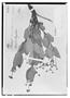 Field Museum photo negatives collection; Wien specimen of Myrcia suffruticosa O. Berg, BRAZIL, J. B. E. Pohl 866, Syntype, W