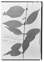 Field Museum photo negatives collection; Wien specimen of Myrciaria amazonica O. Berg, BRAZIL, E. F. Poeppig, Holotype, W