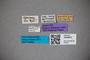 3048603 Oxytelus awakubiensis ST labels2 IN