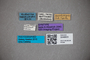 3048603 Oxytelus awakubiensis ST labels IN