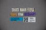 3048620 Oxytelus kavirondoensis ST labels IN