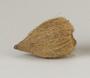 128278.2 betel nuts