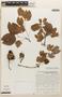 Calliandra tergemina var. emarginata (Humb. & Bonpl. ex Willd.) Barneby, Venezuela, L. Cárdenas de Guavara 2277, F