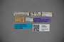 3048630 Oxytelus pallidus ST labels IN