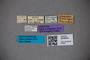 3048634 Oxytelus rhinoceros ST labels IN